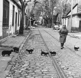 les-chats-de-bercy-paris-1974-exposition-robert-doisneau-bercy-village-270-260
