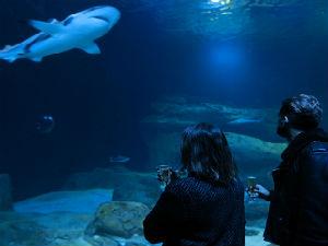nights-aquarium-de-paris-visite-nocturne-champagne